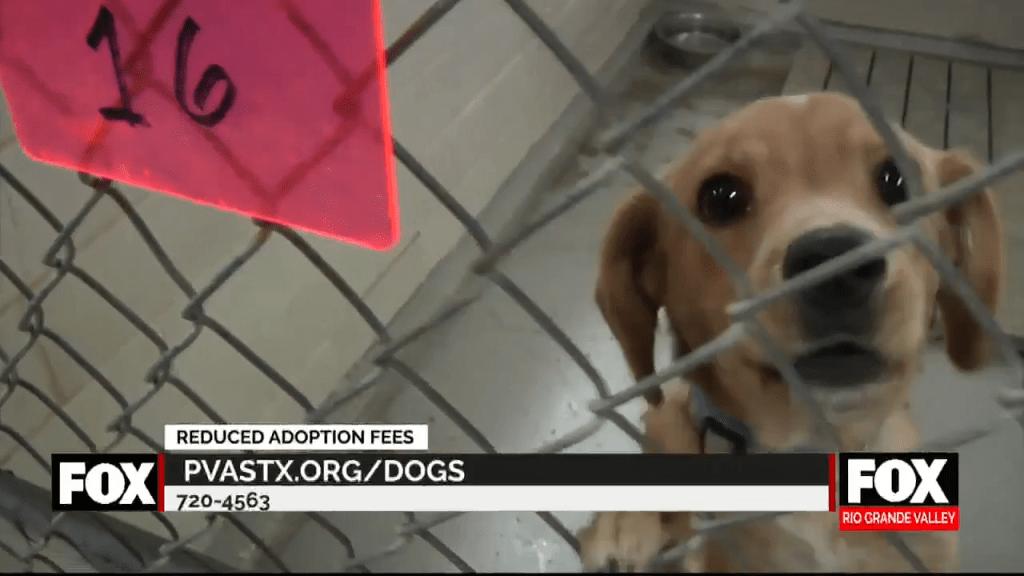Palm Valley Animal Society Reducing Adoption Fees